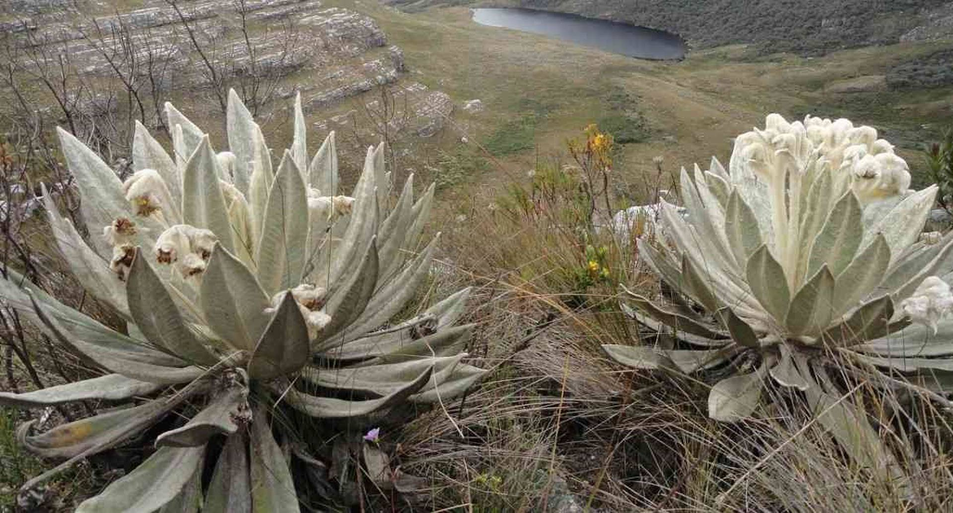 Parque Municipal Ranchería en Paipa